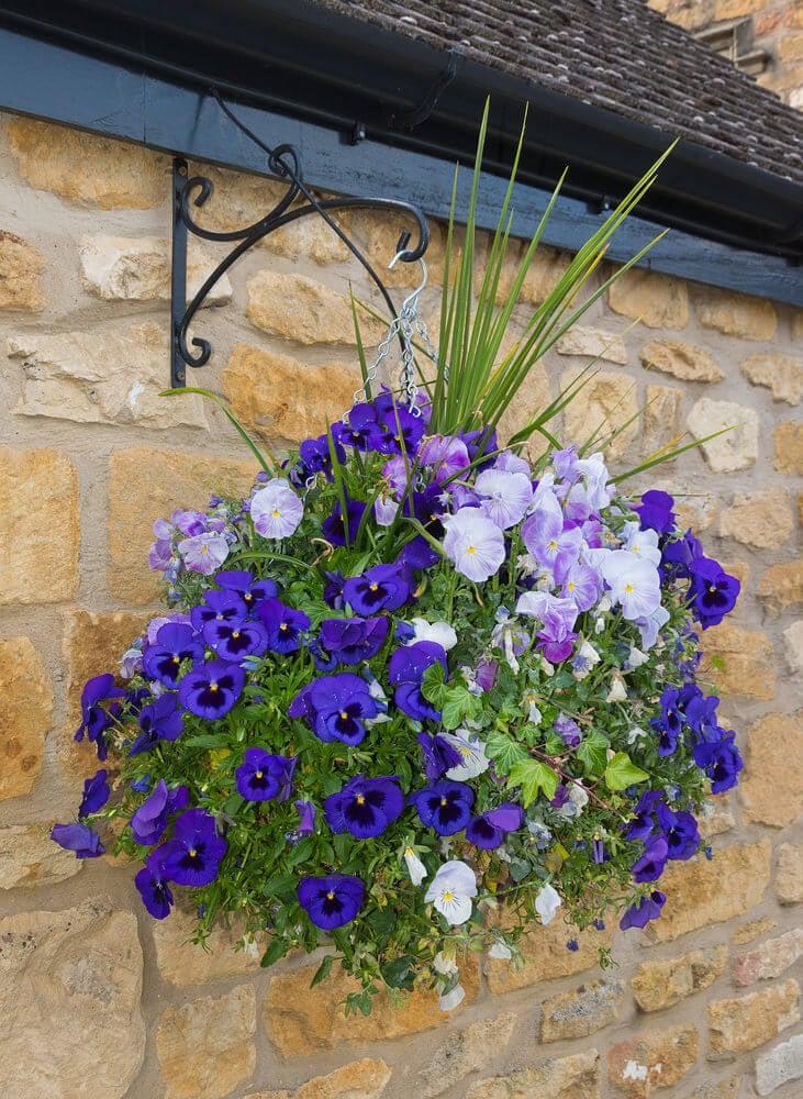 Hanging basket with trailing pansies.