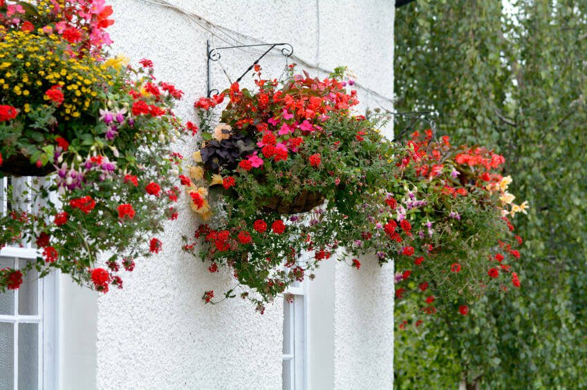 Here's a great example of how you can hang hanging baskets from the wall rather than the usual overhang or beam.