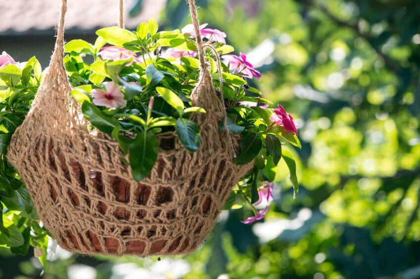 A leafy hanging basket with pink flowers and a clay pot suspended by a woven sling.