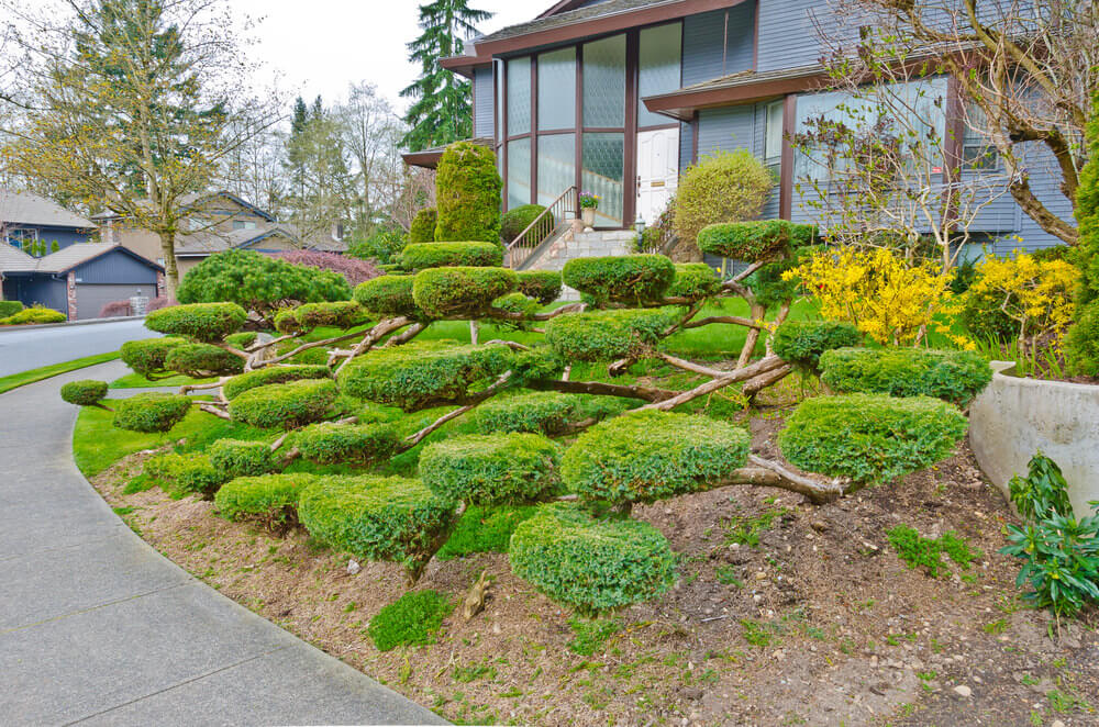 Extra creative dish-like topiary capture the attention of the passers by.