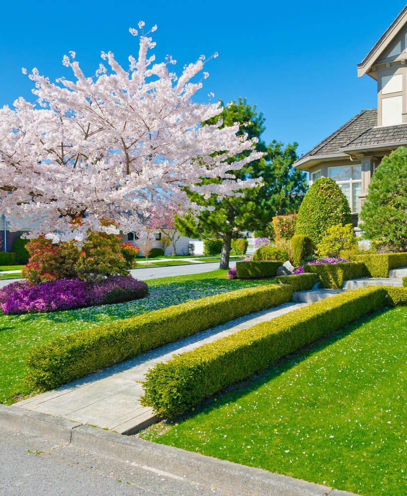 The full-bloomed dogwood tree sprinkles petals on the grassy ground and turns the concrete pathway into a floral aisle that ends at a delicately designed topiary.