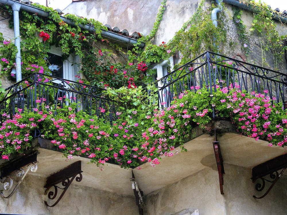 Balcony over flowing with flower boxes and flowerpots as well as vines climbing up the walls of the building creating a flowery jungle like setting.