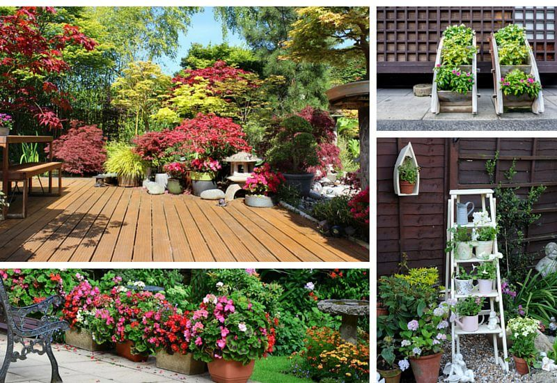 Patio Plant and Flower Ideas