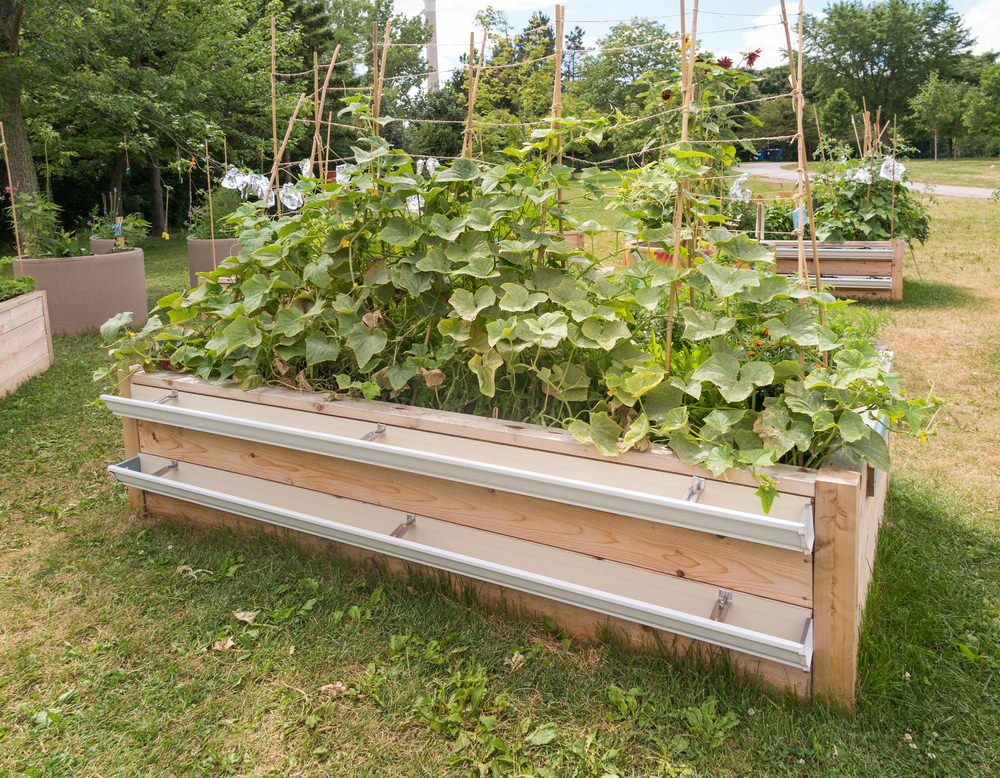 The gutters on the side of this particular garden bed is a great way to store your tools, but also helps with harvesting. Think how streamline the harvesting process is—just pick, plop into the gutter, and hose it down. Sounds pretty smart, doesn't it?