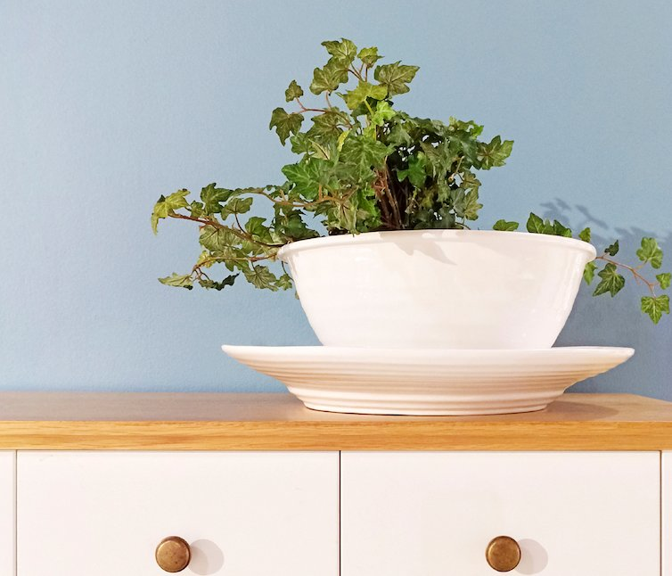 English Ivy, or Hedera helix, is known to filter benzene, formaldehyde, tricholorethylene, xylene, and toluene out of your environment, but is toxic to pets.