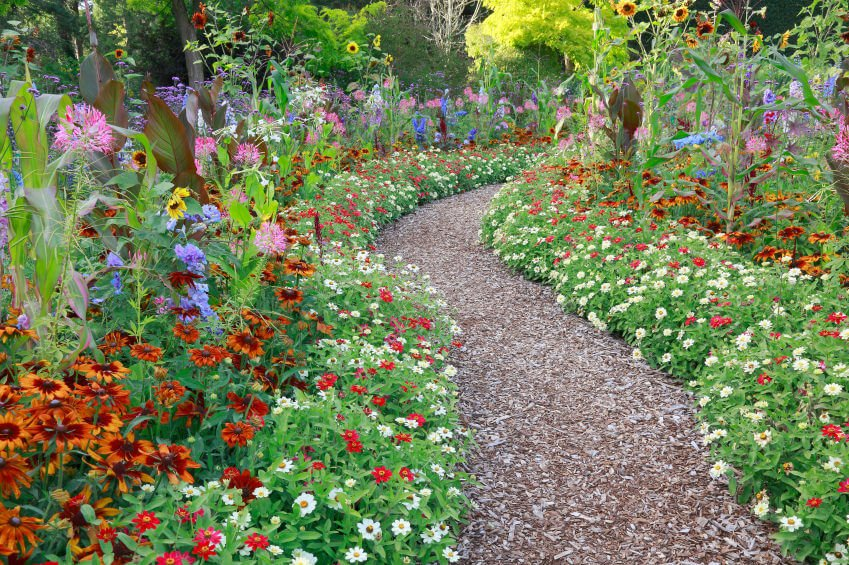 Dried mulch cornered with colorful margaritas and daises, accompanied by tall sunflowers.