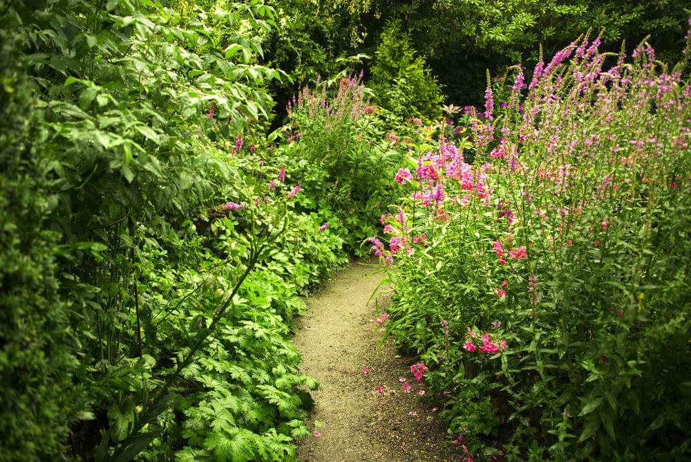 A simple sandy pathway through a lush bush. This one does not require anything, just a plain and vacant path is enough.