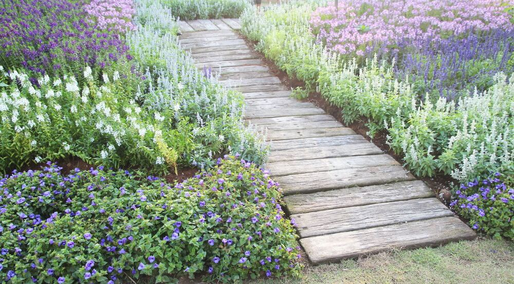 A wood pallet pathway passing through a cloudy atmosphere of these bushy blossoms.