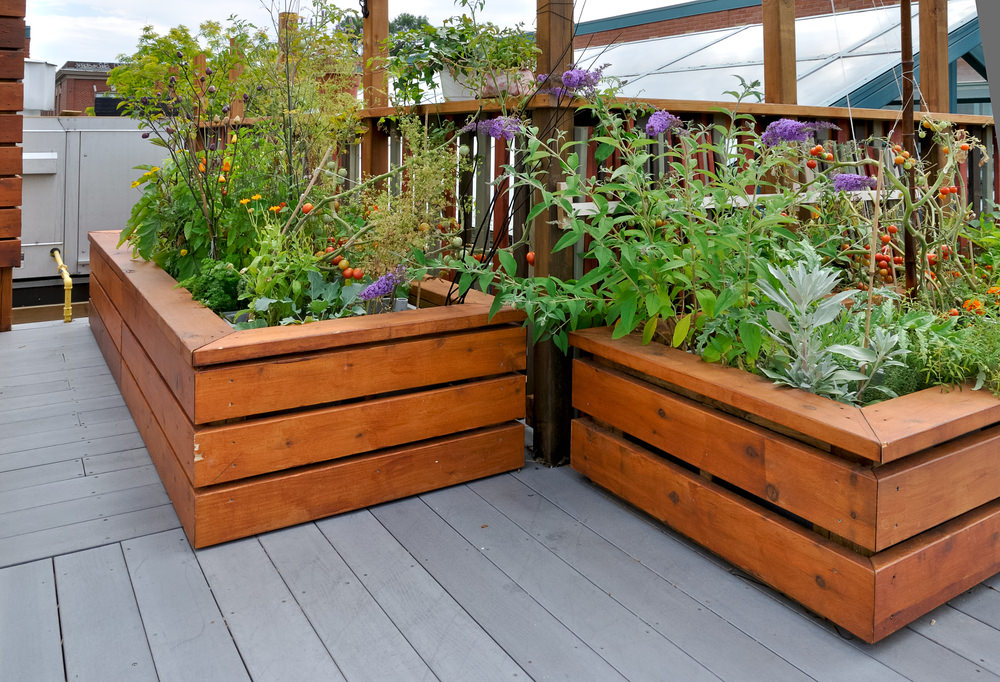 Even though this garden uses wood, the design of the beds provide a modern feel, thanks to the clean lines and rich stain on the wood.