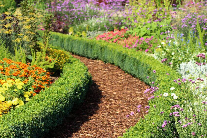 A mulch pathway curbed with green shrubs.