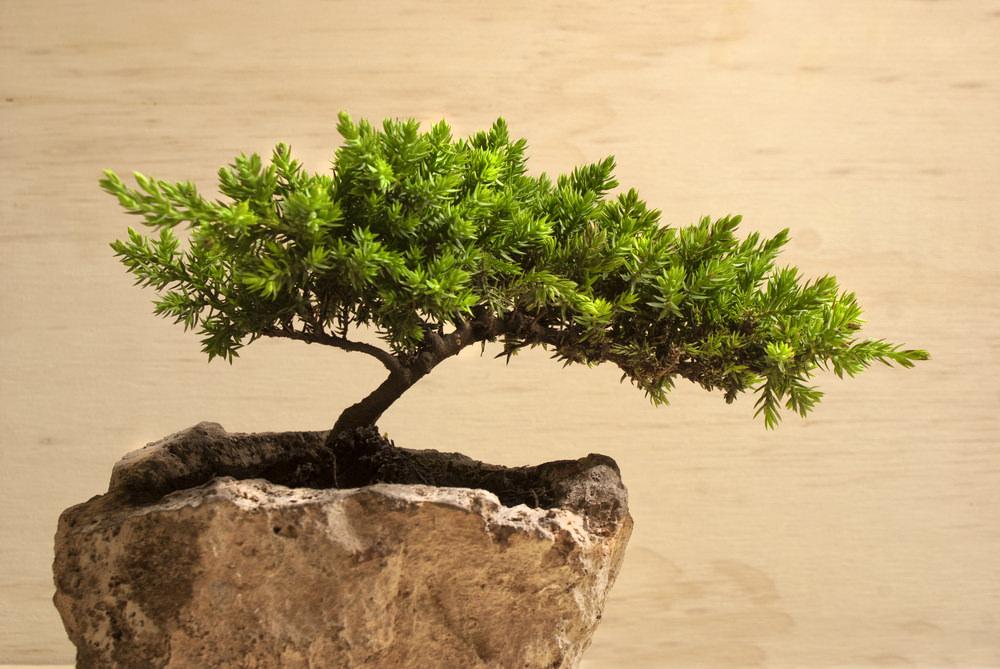 14-bonsai-tree
