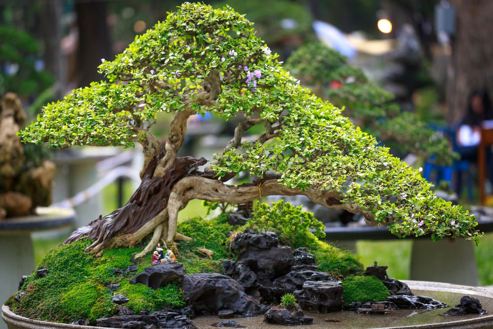 25-bonsai-tree