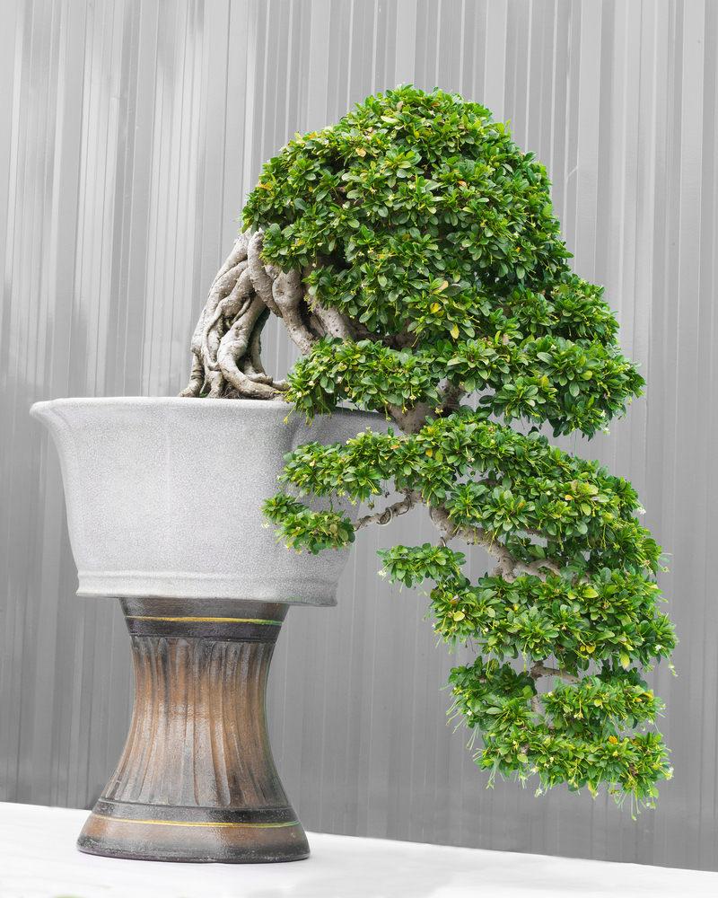 Cascading bonsai tree