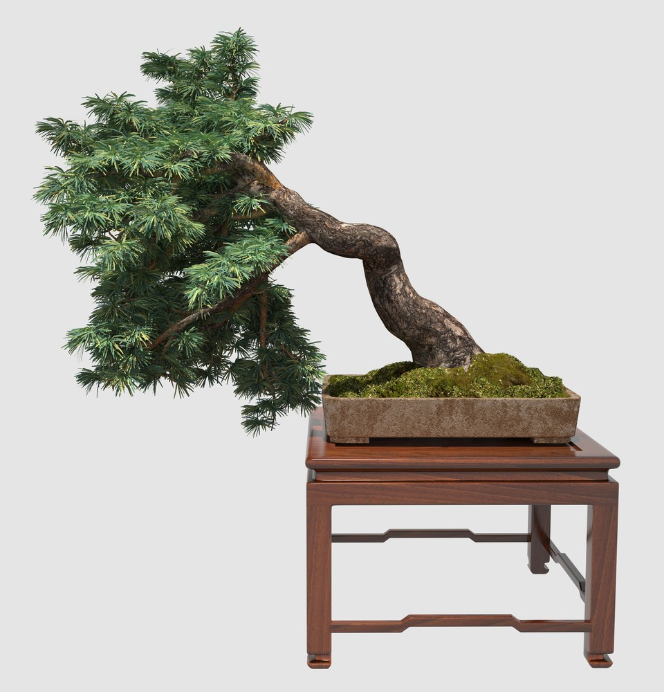 Semi-Cascading Bonsai