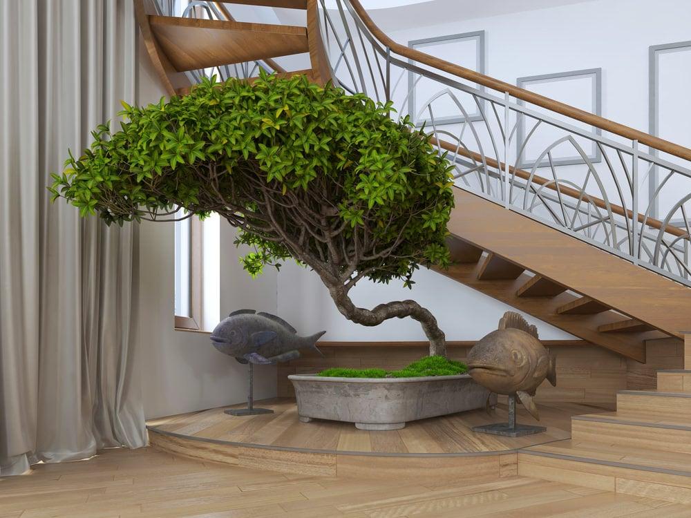 Slanting Bonsai Tree