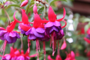 """25+ Plants and Flowers that Start with """"F"""""""