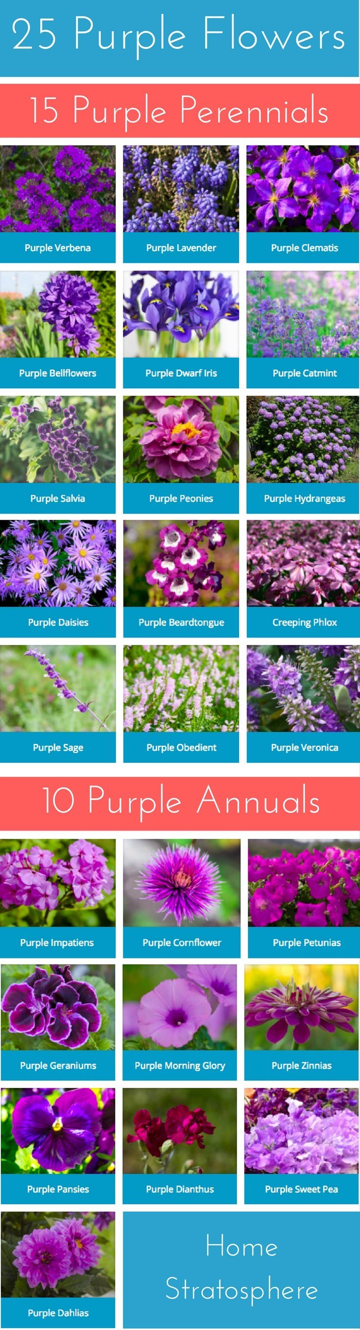 25 Purple Flower Ideas For Your Garden Pots And Planters