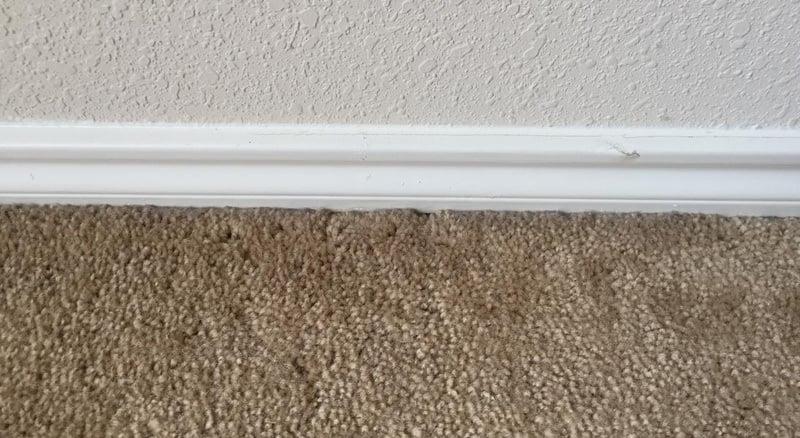 carpet baseboard image