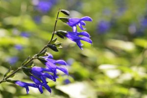 """45 Plants and Flowers that Start with """"A"""""""