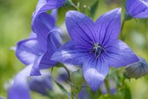 """100+ Plants and Flowers that Start with """"B"""""""