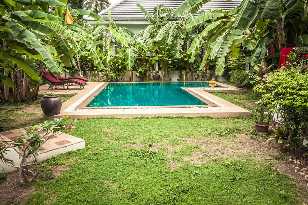 A small L-shaped outdoor pool surrounded by banana trees.