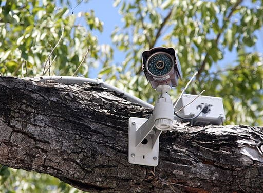 cctv in trees