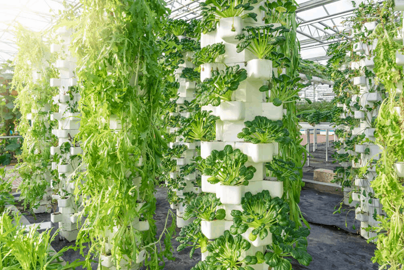 hydroponic vertical garden. Plants That Are Grown In The Vertical Hydroponic Gardening System Grow With Very High-quality. It Also Occupies Less Space And Consumes Fewer Resources Such Garden