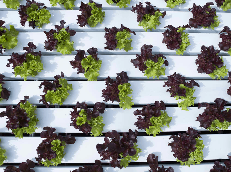 vertical hydroponic gardening system