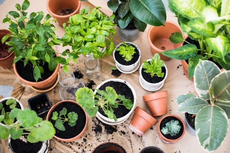 How to grow an indoor garden in a tent instead of a greenhouse there are plenty of reasons that youd want to grow an indoor garden you wont have to fight weeds for one and growing your own tasty vegetables is the workwithnaturefo