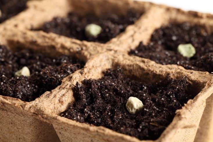 Seedlings in egg carton