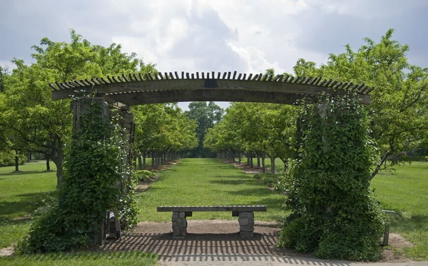 This pergola looks vintage. It features a rustic wood finish covered in a thick brush of vines.