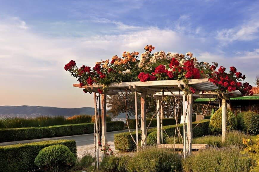 A set of aesthetic pergolas with simple pillars and rafters. Blooming bright flowers are set on top of the pergolas.