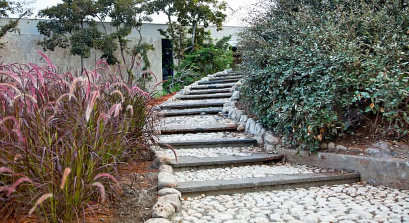 Stone pathway features large slab stairs between layers of white stone embedded in concrete.