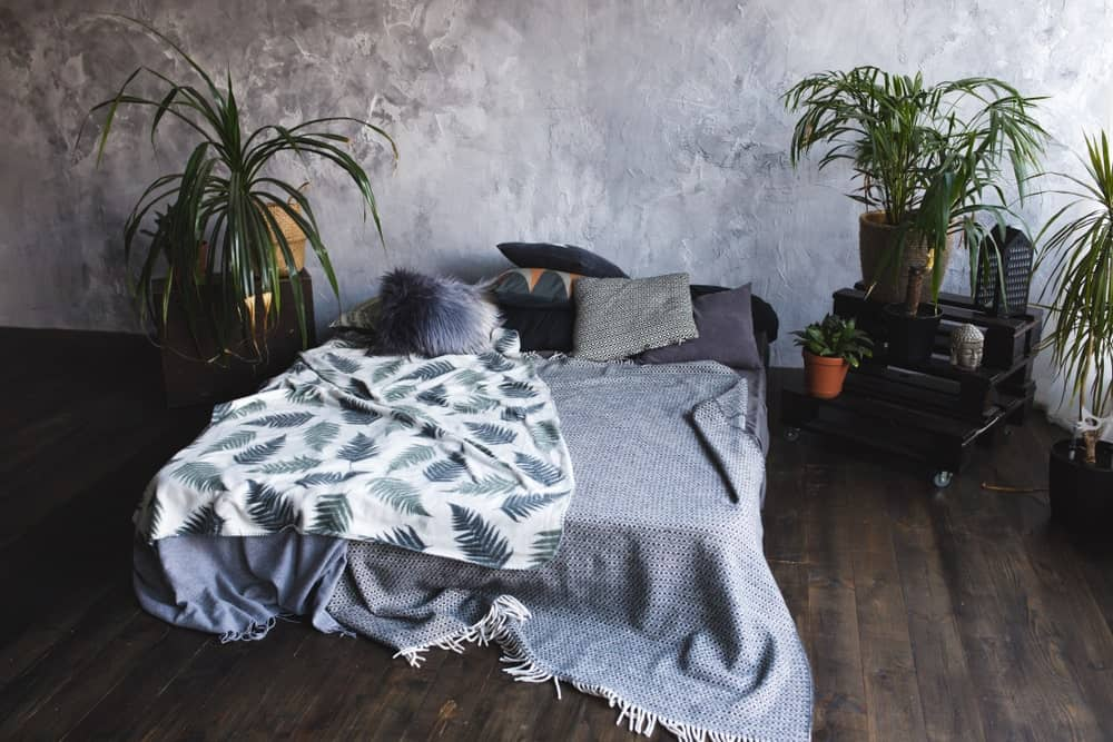 The dark hardwood flooring has a burnt quality to it that complements the bed cushion that has gray sheets and pillows. This bed is flanked by potted plants that contrast the light gray concrete wall at the head of the bed.