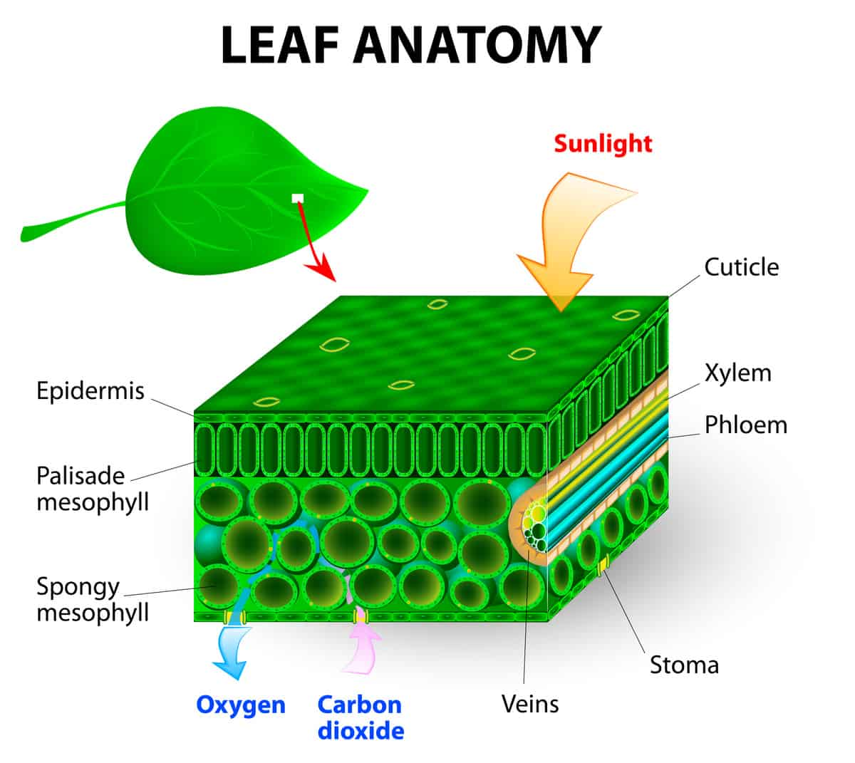 Stem And Leaf Diagram