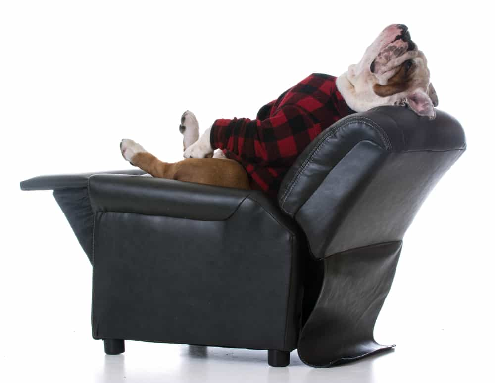 Dog Tired And Relaxing On A Small Recliner