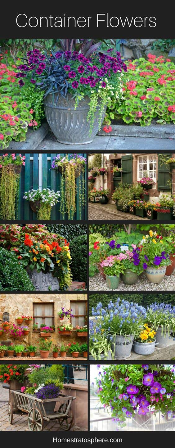 Flowers for containers, planters and pots