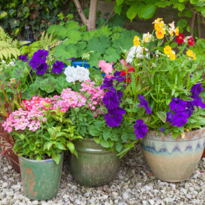 Flowers in pots on gravel surface