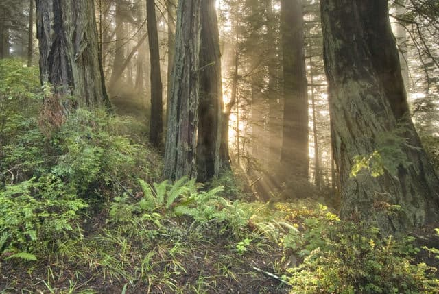 Redwood forest that is managed in an ecological way so that what is harvested is lower than annual growth.