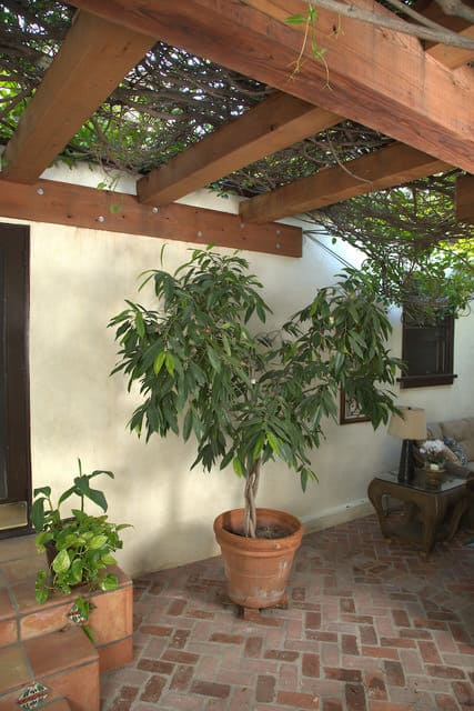 Redwood pergola crowning courtyard