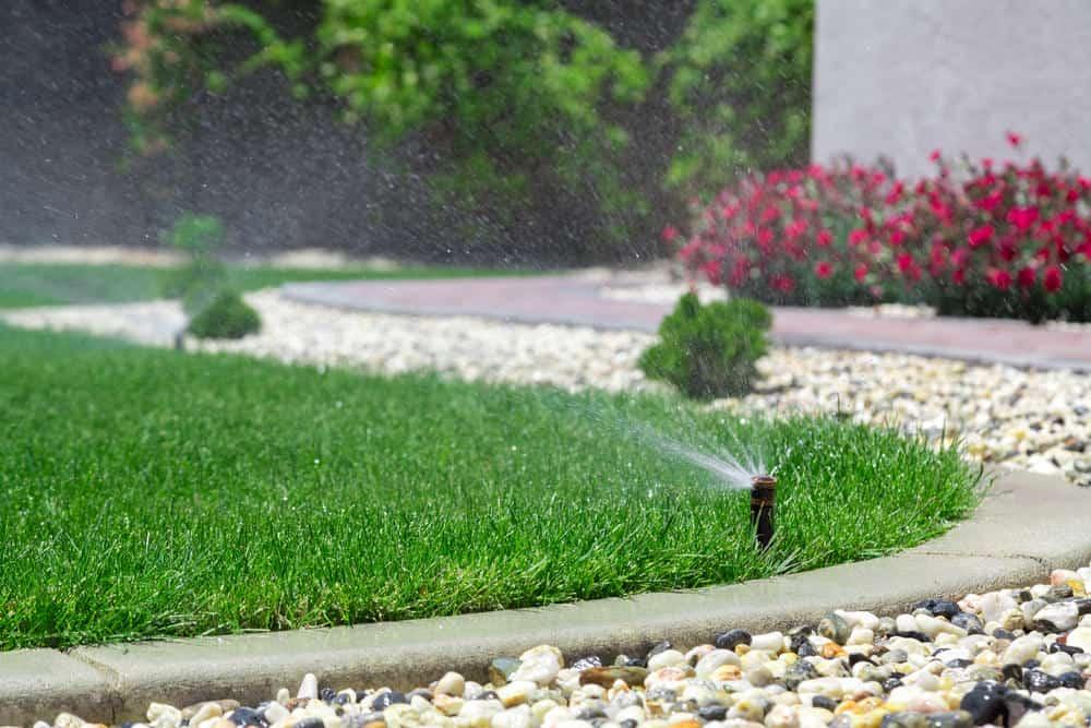 Sprinkler irrigating the front yard