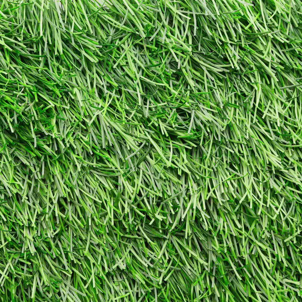 Artificial grass with real grass seed.