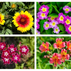 Different types of bicolor flowers.