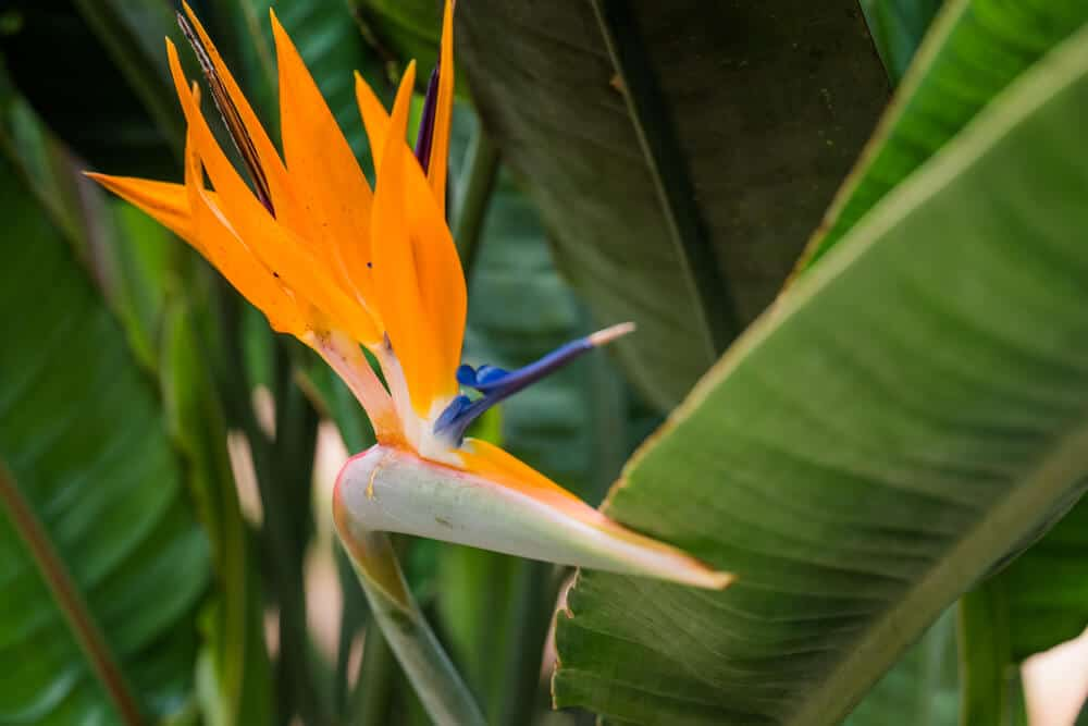 Bird of Paradise with a powerful orange accent.
