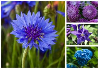 30 Popular Types of Blue & Violet Flowers for Your Garden (A to Z)