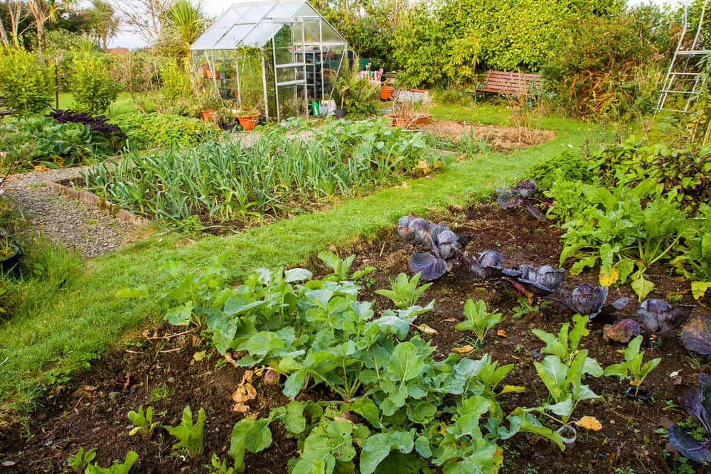 Incredible backyard vegetable garden