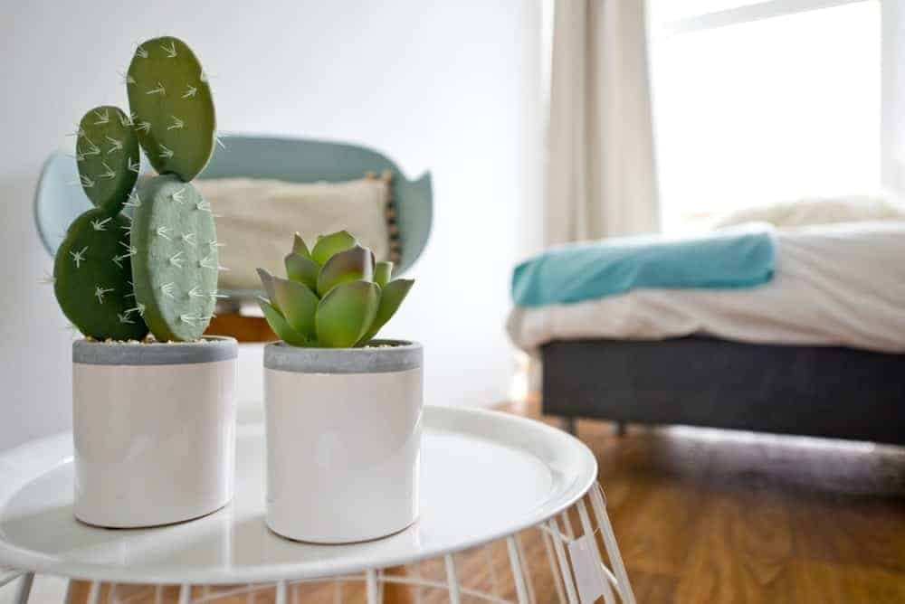 Indoor cactus plants.