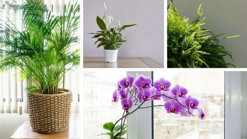 8 Houseplants That Help Lower Indoor Humidity Natural