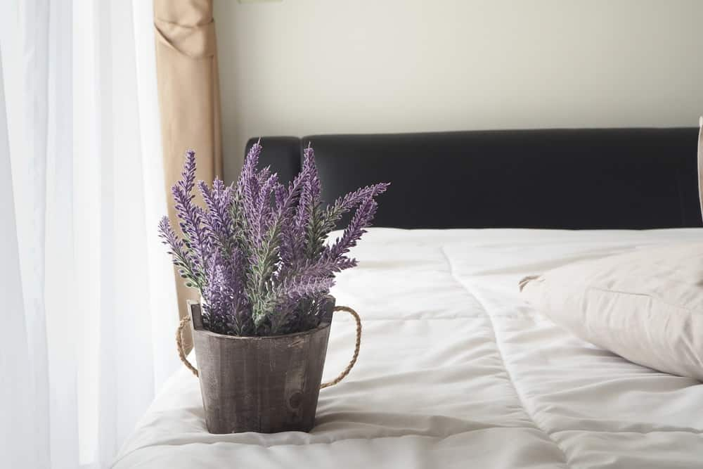 Lavender in bedroom.