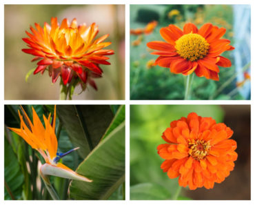 Different types of orange flowers.